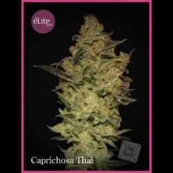 CAPRICHOSA THAI (3)
