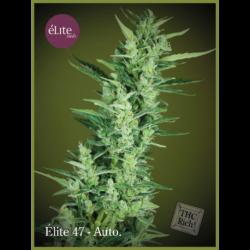 ELITE 47 (7) AUTO