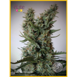 JACK-ULTRA (3) AUTO CBD