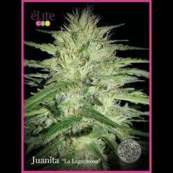 """JUANITA """"LA LAGRIMOSA"""" (7) CBD"""