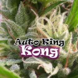 AUTO KING KONG (2)