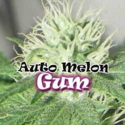 AUTO MELON GUM (2)