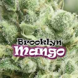 BROOKLYN MANGO (8)