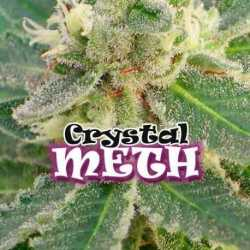 CRYSTAL M.E.T.H. (8)