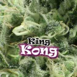 KING KONG (10)