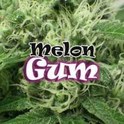 MELON GUM (2)