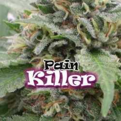 PAINKILLER (4)