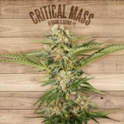 CRITICAL MASS (5)