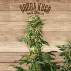 BUBBA KUSH (10)