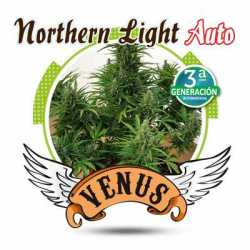 NORTHERN LIGHT AUTO (1)