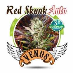 RED SKUNK AUTO (10)