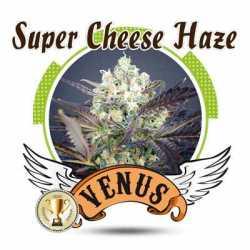 SUPER CHEESE HAZE (10)