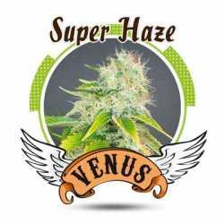 SUPER HAZE (10)