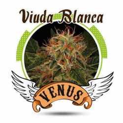 VIUDA BLANCA (100)
