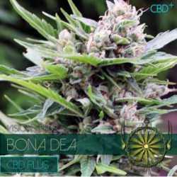 BONA DEA (5) CBD
