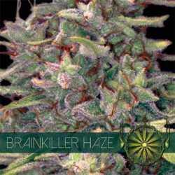 BRAINKILLER HAZE (3)