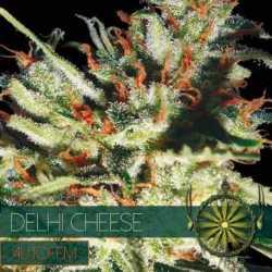 DELHI CHEESE (10) AUTO