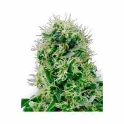 PURE POWER PLANT (3)