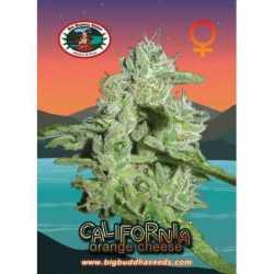 CALI ORANGE CHEESE (10)