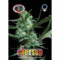 CHEESUS (5)