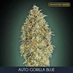 AUTO GORILLA BLUE (25)