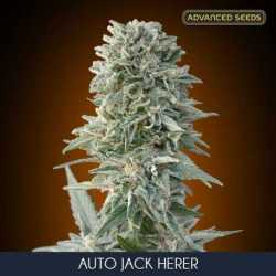 AUTO JACK HERER (3)