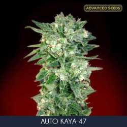 AUTO KAYA 47 (3)
