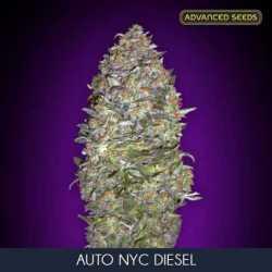 AUTO NEW YORK CITY DIESEL (10)