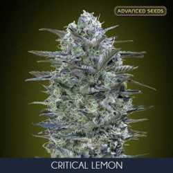 CRITICAL LEMON (3)