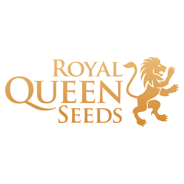 Royal Queen Seeds CBD | www.merkagrow.com